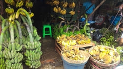 ミャンマーのフルーツ、バナナ、Mawlamyine Travel Information