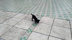 Mawlamyineのパゴダ、猫がいっぱい